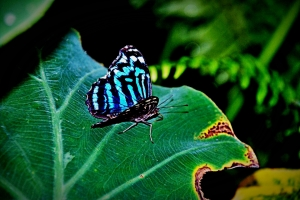 butterfly-22851_960_720